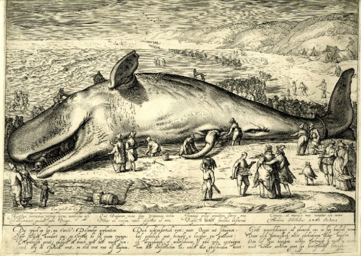 Beached_Whale_-_Jacob_Matham_1602