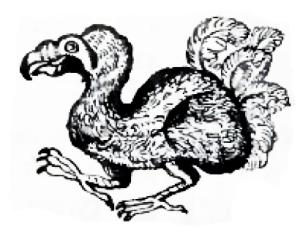 dodo rose