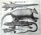 Plate showing 'scaly things' from Lochner & Lochner, 'Rariora musei besleriani' (1716), using Clusius's image.