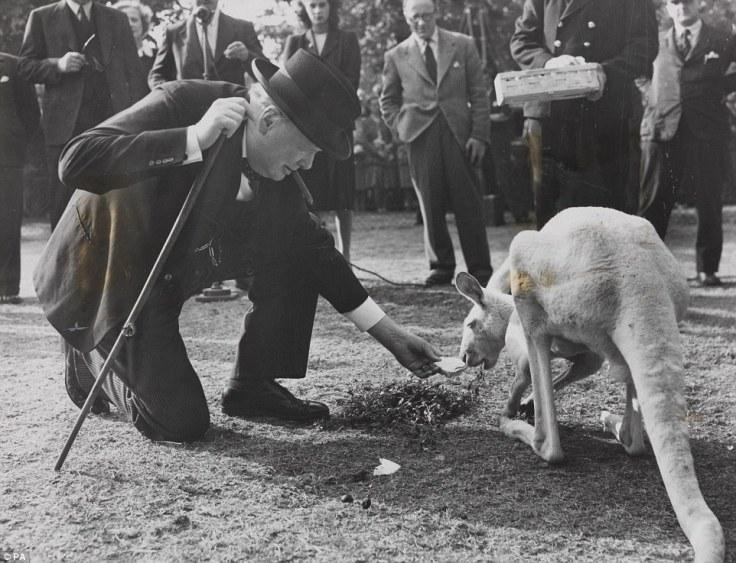 Churchill and white kangaroo