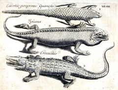 Plate showing 'scaly things' from Adam Olearius's collection catalogue, Clusius's image.