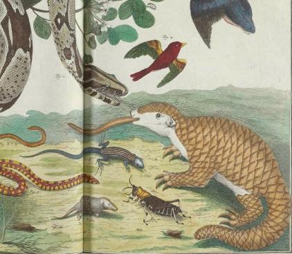 Scaly things plate from Albertus Seba's 1734 'Locupletissimi rerum naturalium'