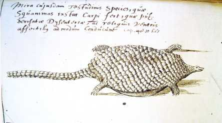 """Jacobus Bontius's original sketch of an amphibious 'Tamach' from his fieldwork in the East Indies, """"somnolent animal"""" with a """"cold nature""""."""