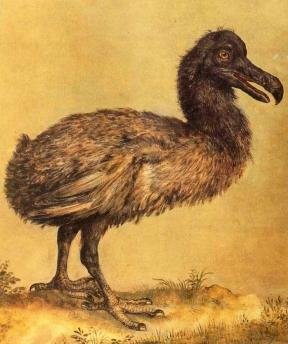 Dirck de Quade Van Ravesteyn (?), dodo in the collection of Rudolf II,
