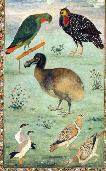 Ustad Mansur, Dodo and the birds, c.1625, Hermitage, St. Petersburg