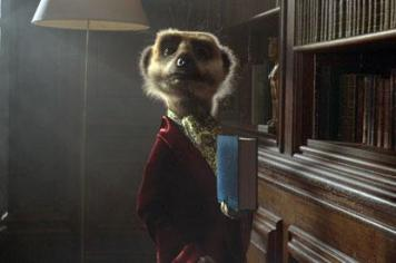 Compare the meerkats....