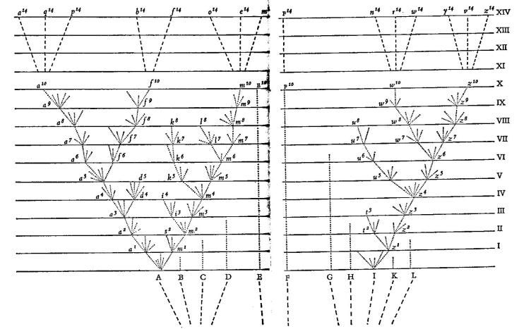 Darwin's branching diagram