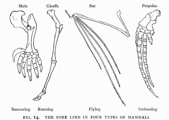 mamal bone structure