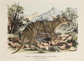 H.Scott, The Tasmanian Tiger, (1871)